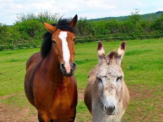 chevaux-anes-autres-animaux-saulieu-france-5873376728-694780